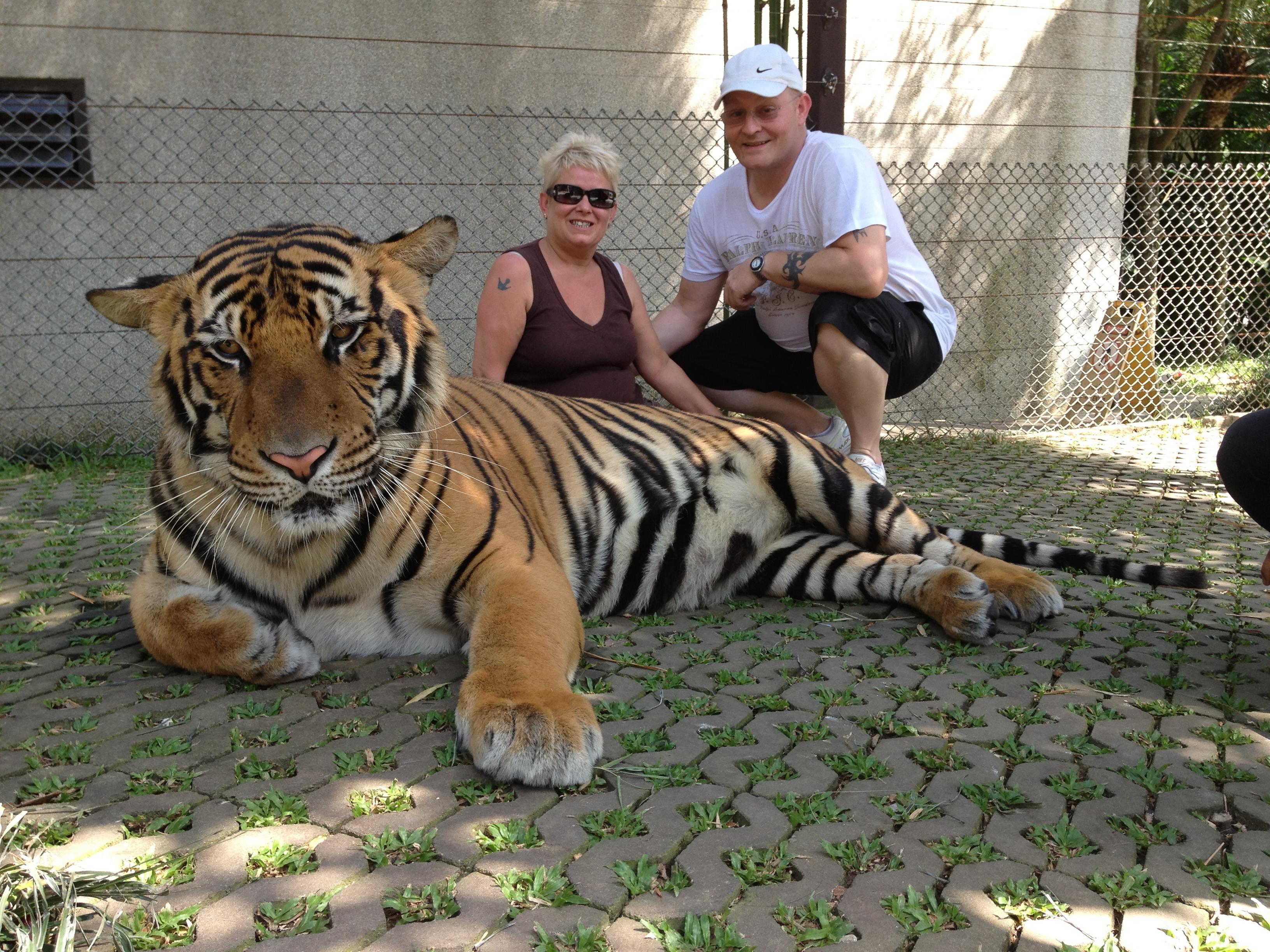 Tiger Kingdom Mae Rim